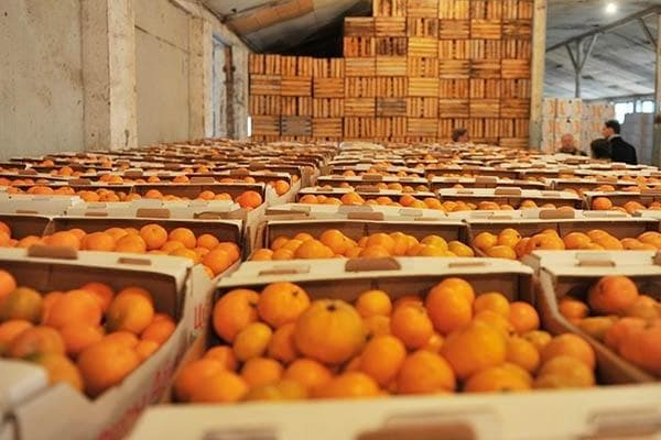 Мандарины в ящиках на складе