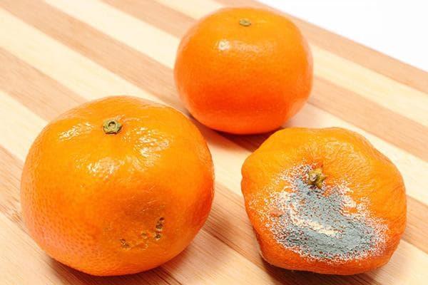 Свежий и испорченные мандарины