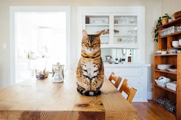 Кот на деревянном обеденном столе