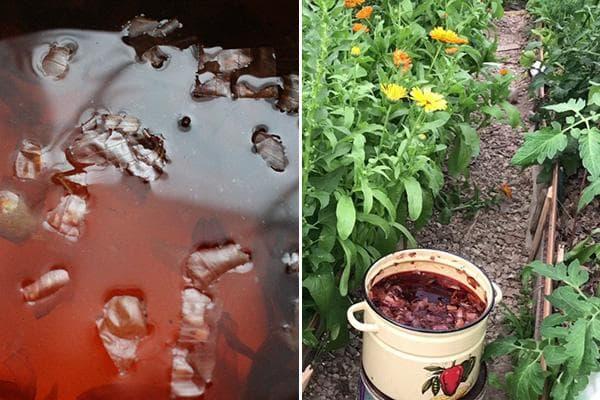 Настой луковой шелухи от вредителей в саду