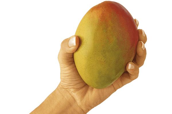 Плод манго в руке