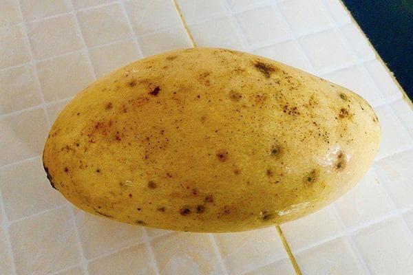 Испорченное манго