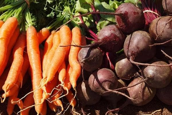 Урожай моркови и свеклы