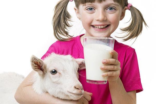Девочка пьет козье молоко