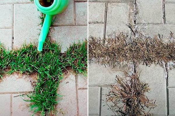 Выведение травы в швах тротуарной плитки