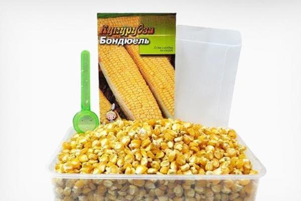 Семена кукурузы Бондюэль
