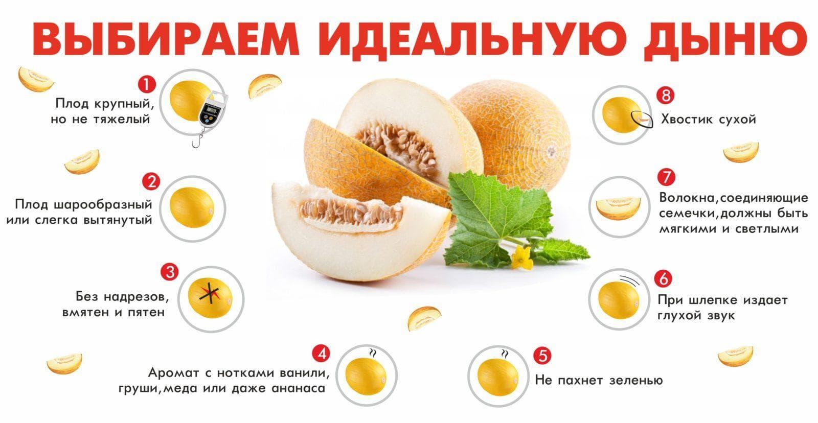 Критерии выбора вкусной дыни