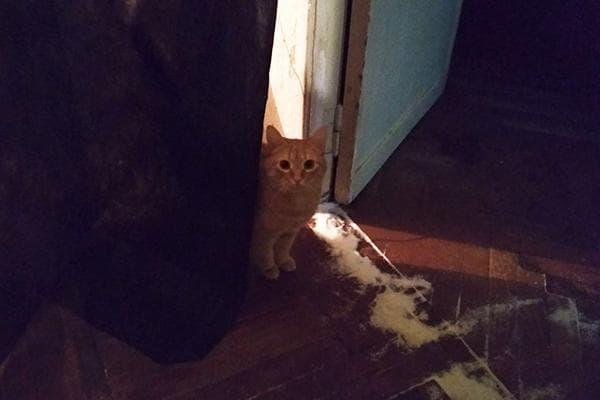 Кот и рассыпанная под дверью соль