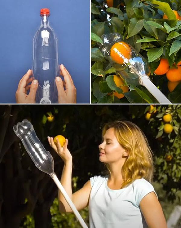 Собиратель фруктов, сделанный из пластиковой бутылки