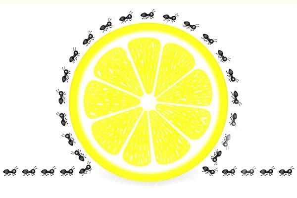 Лимон от муравьев