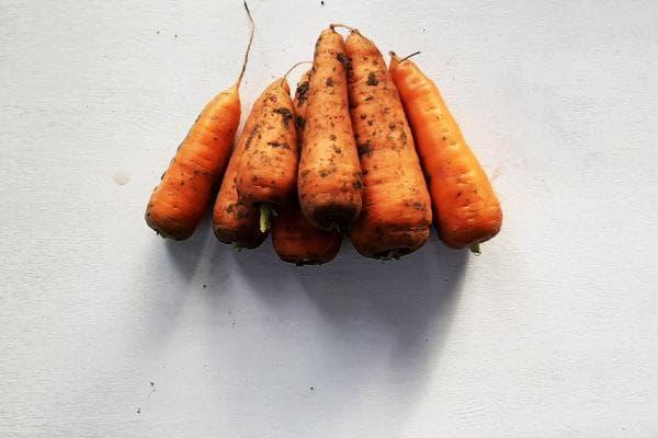 горы морковки