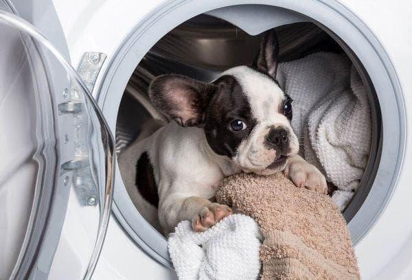 Собачка в стиральной машинке