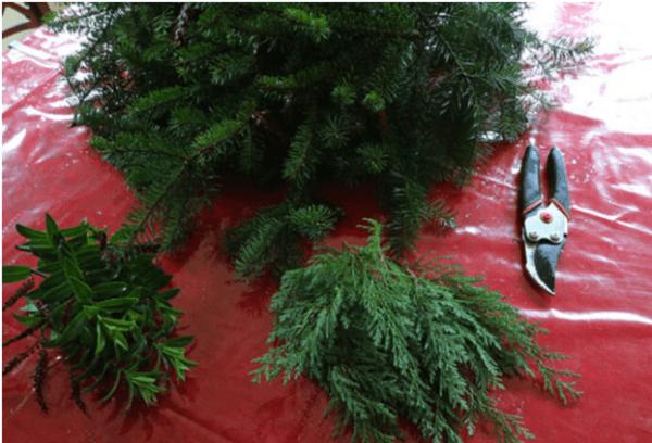 Живые ветки елки