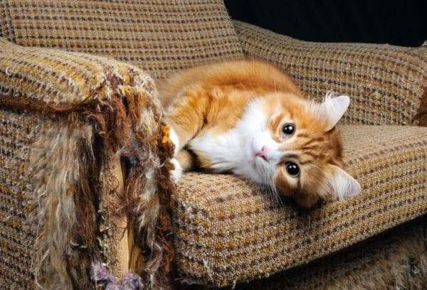 Кот ободрал диван