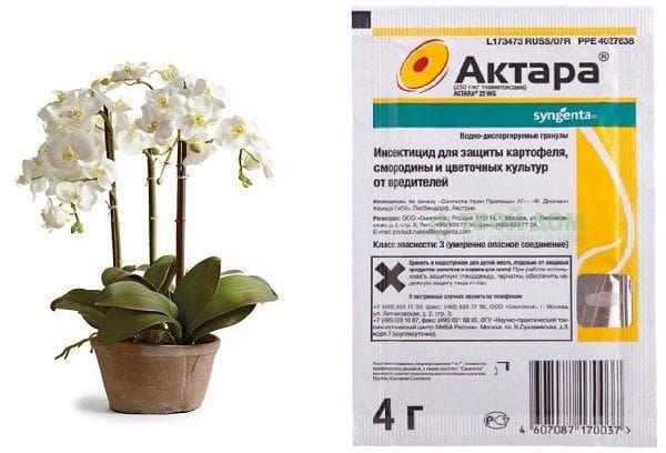 Актара для орхидей от мошек