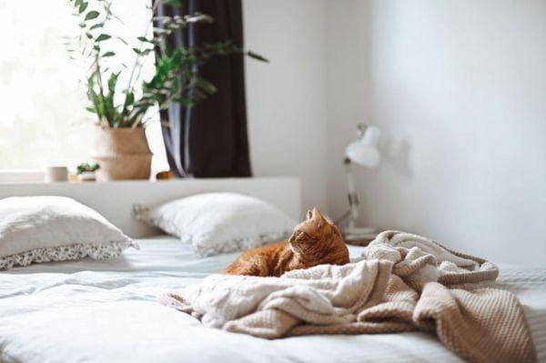 Кошка на постели