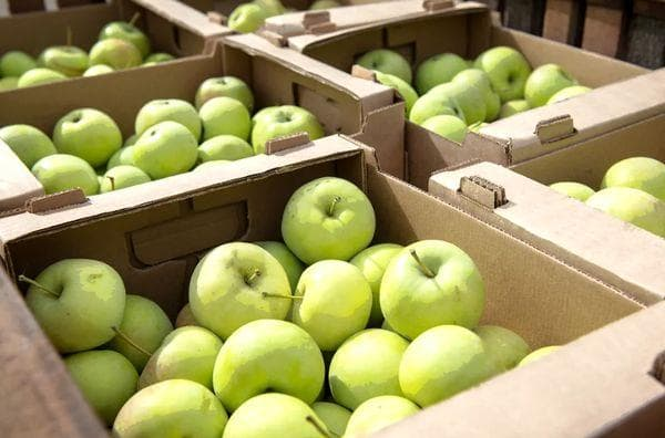 Зеленые яблоки в ящиках