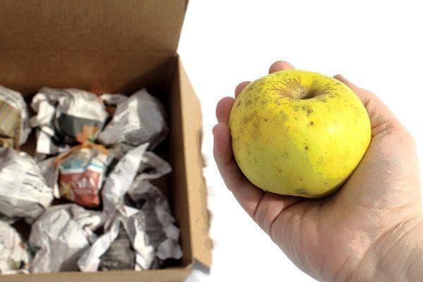 Подготовка яблок к хранению