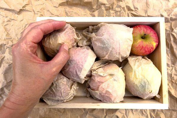 Оборачивание яблок в бумагу