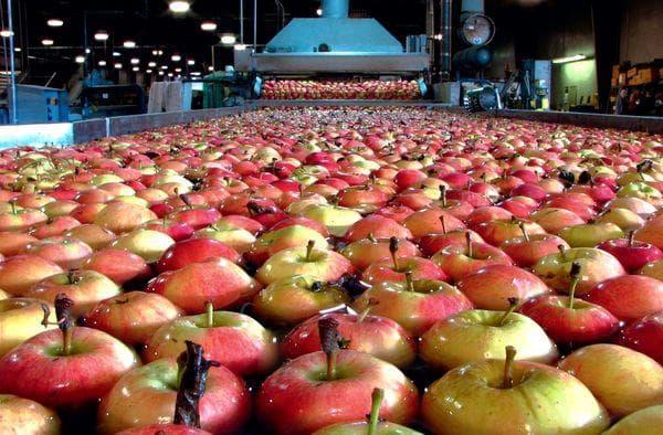 Обработка для длительного хранения яблок
