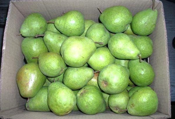 Ящик с зелеными грушами