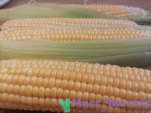 Варка кукурузы фото 2